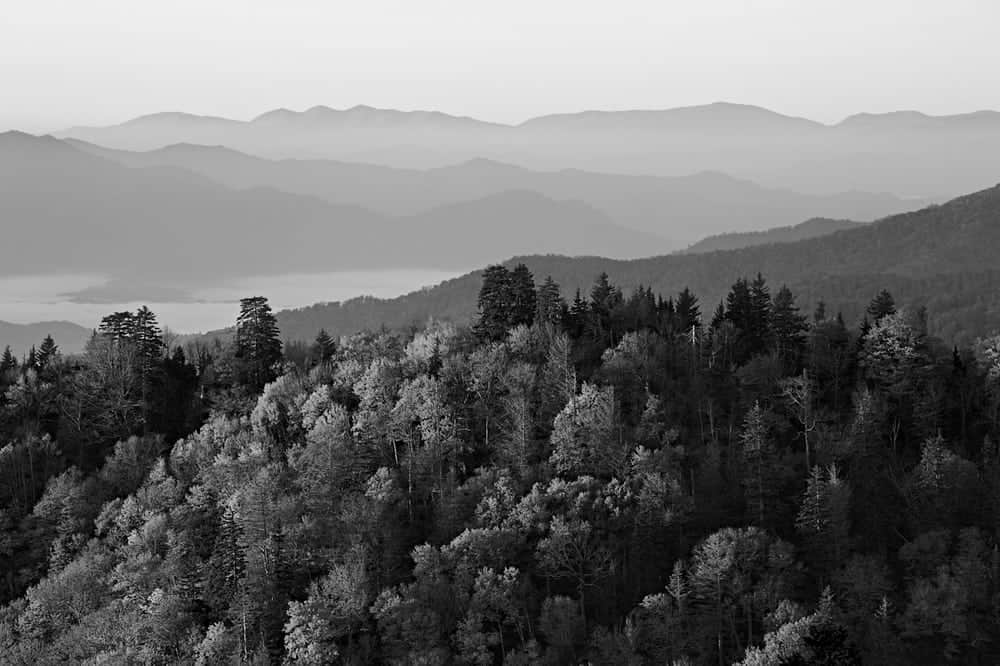 Black and white photo of trees in the Smoky Mountains.