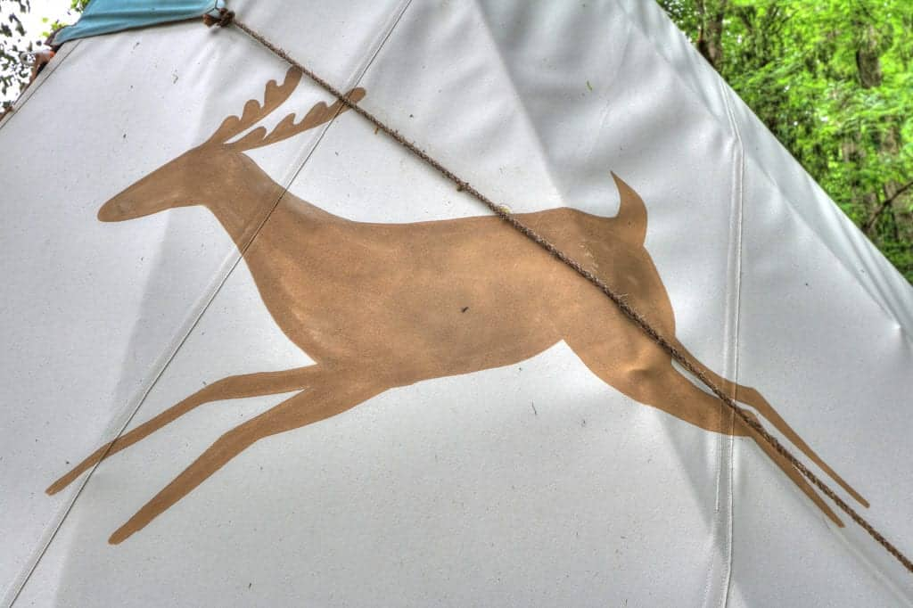 deer on camping tent