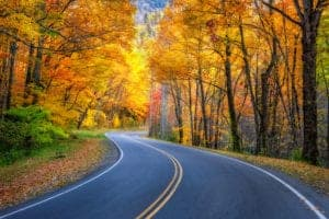 road in the smoky mountains surrounded by trees in the fall